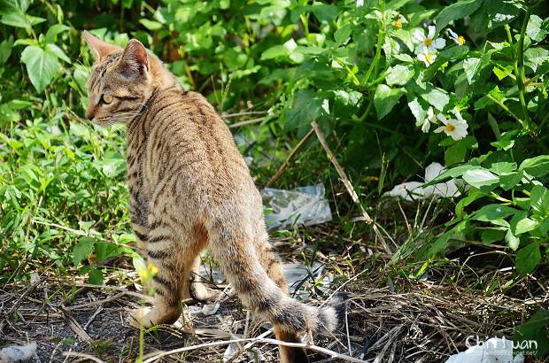 Cat漫步虎班05.jpg