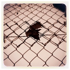 Caught between two fences (susivinh) Tags: hoja fence leaf friday valla viernes iphoneography fencefriday