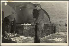 Trndelag Eggcentral (National Library of Norway) Tags: egg postcards postkort nasjonalbiblioteket arbeidsliv trndelageggcentral nationallibraryofnorway trndelageggsentral