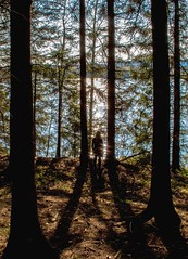 Waterfront (bjorbrei) Tags: trees lake water oslo norway backlight forest trunks shimmering spruces maridalsvannet
