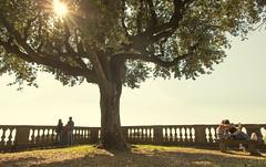 sotto l'albero (ROSSANA76 Getty Images Contributor) Tags: parco verde relax natura persone albero vita rami coppia amiche balconata