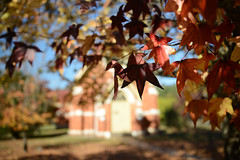 The Little Country Church (Ptolemy the Cat) Tags: autumn church leaves colours bokeh australia victoria foliage jamieson liquidambar liquidamber nikond600 nikonf282470mmlens