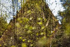 Formally Defined (pni) Tags: blur building tree green suomi finland concrete leaf helsinki branch bokeh centralpark multipleexposure helsingfors tripleexposure multiexposure keskuspuisto skrubu pni centralparken pekkanikrus