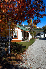 That Man in Red Again! (Jocey K) Tags: autumn windows newzealand people building tree cars lamp leaves architecture oak autumncolours driveway southisland centralotago tres arrowtown tripdownsouth settlerscottagemotel