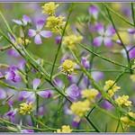 Purple and Yellow thumbnail
