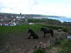 Two horses overlooking Whitby  Harbour, North Yorkshire (rossendale2016) Tags: two horses field harbour yorkshire north whitby overlooking