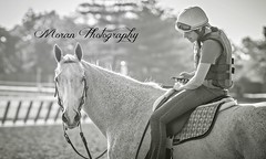Violette Pony (EASY GOER) Tags: park horses horse sports belmont racing races thoroughbred equine