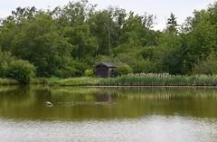 George C. Reifel Migratory Bird Sanctuary (careth@2012) Tags: reflection nature reflections landscape scenery view scenic scene naturereserve birdsanctuary georgecreifelmigratorybirdsanctuary