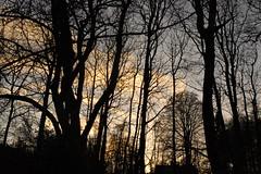 Birnam Woods (monkeyiron) Tags: scotland perthshire dunkeld birnam