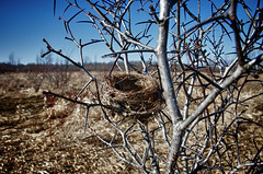 Empty Nest Syndrome (lynn.h.armstrong) Tags: camera blue trees sky brown ontario canada tree art field grass forest lens geotagged photography grey photo spring interesting mac weeds aperture nikon long flickr nest zoom bokeh empty south images brush syndrome lynn h getty spike thorns nikkor thorn armstrong stormont vr licence afs request dx sault attribution ingleside 2011 ifed 18200mm f3556 noderivs vrii d7000 lynnharmstrong