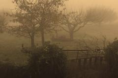 sepia mist (nicolau.coelho) Tags: trees winter mist sepia canon arvores inverno nk nevoeiro peneladabeira eos550d nicolauflorcoelho nik0z0r