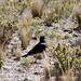 Uccello non identificato verso lo stretto di Tiquina