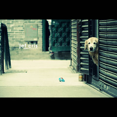 Dog Day Afternoon (jef cris) Tags: canon waiting dof bokeh naturallight macau macao dogdayafternoon jefcris