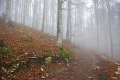 ...ancora nebbia! (paolo-55) Tags: tv nebbia fregona boscodelcansiglio nikond700 afszoomnikkor1424mmf28ged forestadelcansiglio altopianodelcansiglio