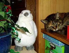 Percy and Erica... (carlene byland) Tags: christmas plant cat penguin tabby shelf sleepy boxes
