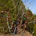 360_Trees_2011_144