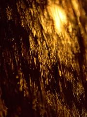Sun Fall (jaxxon) Tags: light sunset shadow abstract macro texture wet water dark lens prime nikon sundown micro fixed abstraction 28 mm nikkor lowkey liquid f28 vr afs watery 105mm 105mmf28 d90 wetness nikor f28g gvr jaxxon 105mmf28gvrmicro nikkor105mmf28gvrmicro nikon105mmf28gvrmicro jacksoncarson