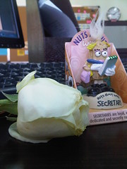 THANKS NORA FOR THE ROSE (R.ALGYED) Tags: rose office