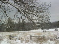 Light dusting of snow (ems18) Tags: winter december maine sangerville eastsangerville