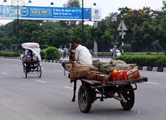 1921 Jaipur, Rajasthan, India (Traveling Man  Back in the world) Tags: city india man fruit amber indian capital donkey vegetable cart jai jaipur rajasthan ii singh subcontinent city india south sawai canonef24105mmf4lisusm republic canoneos50d pink asia maharaja markaveritt