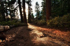 Sentinel Dome Trail (cbkamp) Tags: california trees light sun forest trail yosemitenationalpark sentineldome
