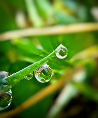 A Drop of Luck (Chris Willis 10) Tags: green simon water rain luck refraction clover sait 4leafclover simonsait