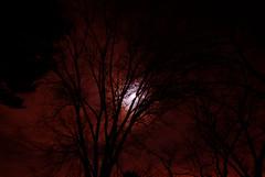 Red Sky (follow my new account xxxxxxxxxxxxxxxxxxx) Tags: trees sky cloud moon tree night clouds cloudy january maryland planet nite 2012 derwood