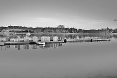Still (Susie Potter) Tags: wood trees blackandwhite reflection birds river boats woodbridge