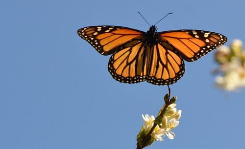 Butterfly flying away - photo#40