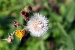 unwanted plant (wiwin.wr) Tags: fauna flora dof bokeh upclose 2012 beautyofnature efs1785mmf456isusmlens canoneos60d dofshot