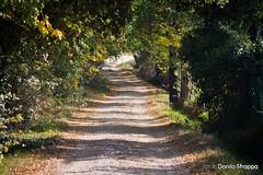 sentieri di campagna (Danilo-Esse) Tags: vineyard wine country grapes autunno grape vino uve vigneti torgiano stradadelvino