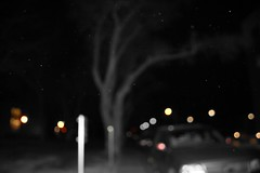Tree (danie216) Tags: blackandwhite color tree cars photography compilation wtamu bookeh