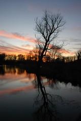 Sunset at Kirkley Fen (Kirkleyjohn) Tags: uk sunset sky reflection tree clouds atardecer treesilhouette suffolk sonnenuntergang reflet eastanglia lowestoft coucherdusoleil kirkley fenpark kirkleyfen