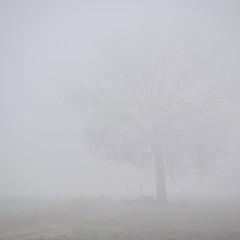 Nebbia a mezzogiorno (MING page) Tags: tree fog nebel ombra campagna terra nebbia albero tronco ming bianco freddo baum rami ravenna pianura campi neutro sagoma mingsign