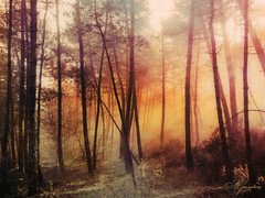 Pinus (XIX) (Transmontano) Tags: tree textura portugal photoshop arvores legacy texturas textured bragana pinheiros braganca vilaflor xoox roios transmontano ilustrarportugal spiritofphotography artofimages magicunicornverybest addvf portugalmagico magiayfotografia mygearandme