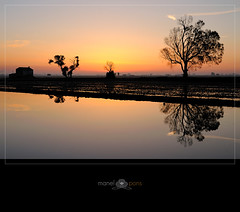 A medias con la luz (manel pons) Tags: luz sunrise alba amanecer catalunya tarragona reflejos reflexes deltadelebre terresdelebre deltadelebro larapita santcarlesdelarapita manolopons manelpons elsalfacs montsi