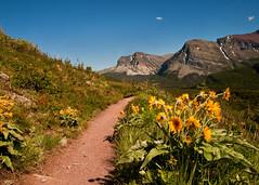 {Glacier National Park~Iceberg Trail} (Farmgirl18) Tags: park flowers mountain snow mountains montana path glacier hills trail ear glaciernationalpark mules