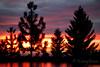 Day24_3652012 (Kenny Bemis) Tags: sunset sky colors forest project landscape tahoe national 365 kenny bemis