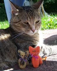 Gigi with kitty dolls (joellesdolls) Tags: cats cat kitten kitty stuffedanimal kitties catdoll
