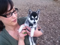 asher the klee kai puppy and his human mom (_tar0_) Tags: park puppy dogpark asher jaycee kleekai alaskankleekai jayceedogpark