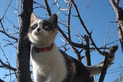 DSC_0009 Xina (visol) Tags: kitten gatita chatte xina gateta