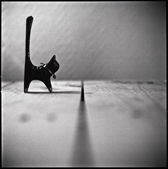 Will the cat cross the slit? (Supermarketsong) Tags: cat chat hasselblad proxar thelittledoglaughed