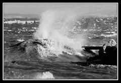Dferlante (V.Charvet) Tags: winter bw lake cold ice nature water port landscape vent schweiz switzerland eau suisse suiza geneva swiss hiver nb paysage vague genve froid hielo ginebra glace houle lakegeneva tempte versoix laclman kalte lments nikond300 portchoiseul hibierno bisenoire