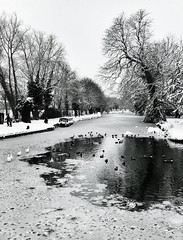 036/366 [05.02.2012] (paulyd) Tags: trees bw snow ice water river hertfordshire ware riverlee iphone project365 project366 iphone365 iphoneography iphone366