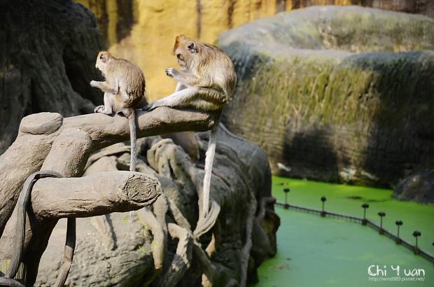 木柵動物園08.jpg