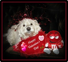 """2/12B ~ """"Will you be my Valentine?"""" (ellenc995) Tags: friends red love riley westie sensational westhighlandwhiteterrier mm challenge valentinesday 2012 february14 coth supershot pet100 motifdchallengewinner platinumheartaward thesuperbmasterpiece 100commentgroup theperfectpinkdiamond iloveyouriley yearofholidays coth5 naturallywonderful christmaspicturegallery 12monthsfordogs12 thesunshinegroup"""