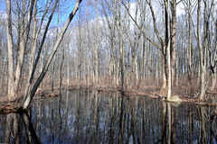 Scenes from a Swamp (Eddie C3) Tags: nature forest swamps wetlands rocklandcounty naturewalks tallmanmountain