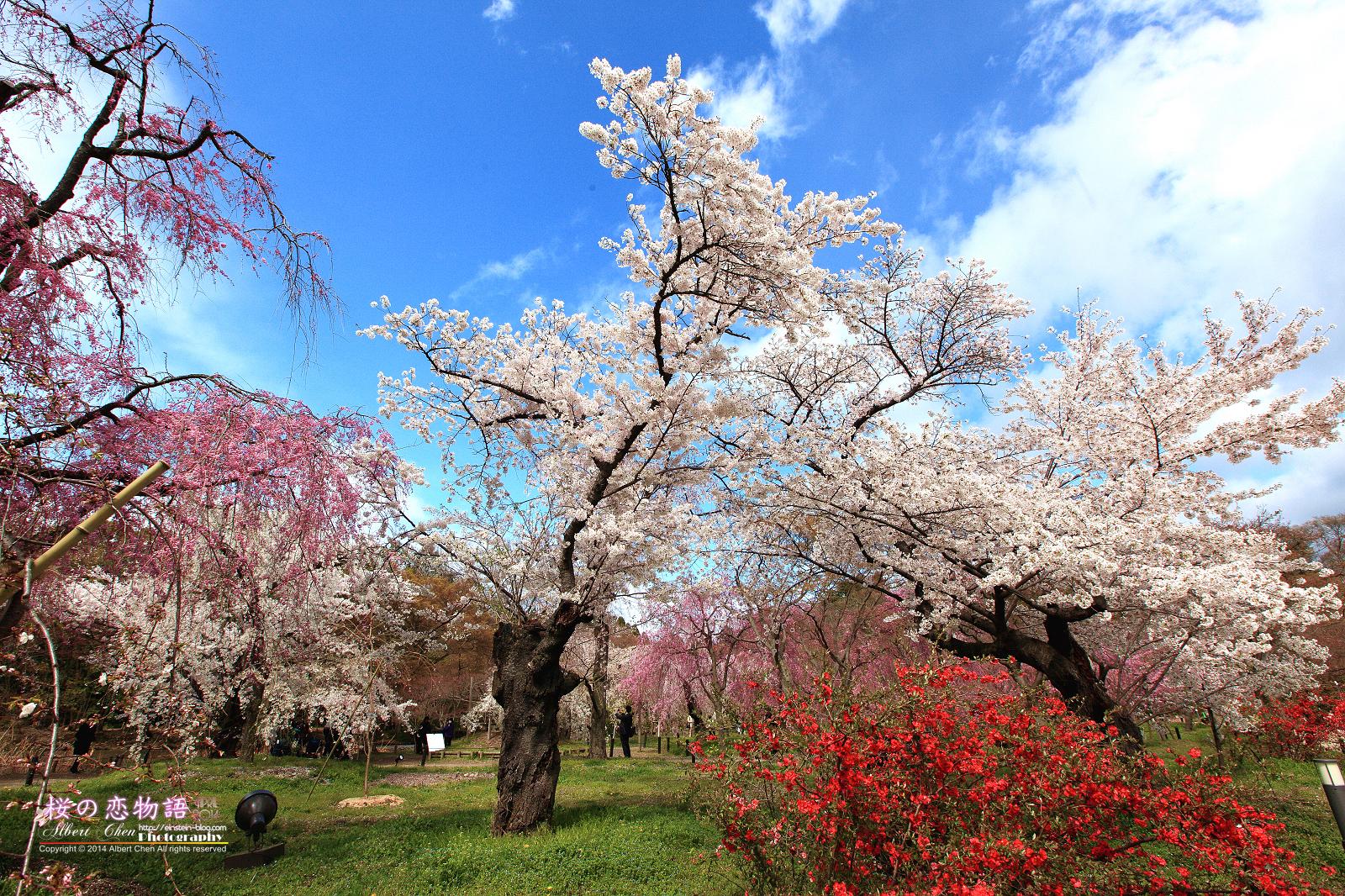 2014-04-04-13h36m47IMG_4511