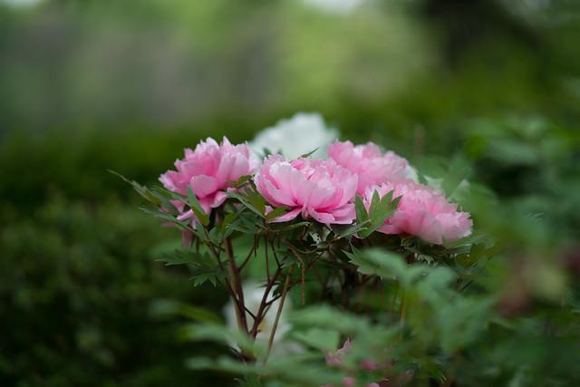 花ざかり-9