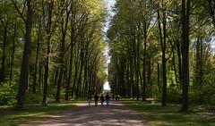 Schlosspark, Schloss Augustusburg, Brhl (maxunterwegs) Tags: park parque germany deutschland palace alemania parc nordrheinwestfalen palast alemanha brhl alemagne schlossaugustusburg